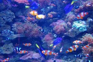Long_Beach_Aquarium_of_the_Pacific_(1067895139)